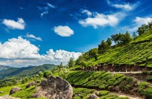 Kerala India travel background - green tea plantations in Munnar, Kerala, India copy