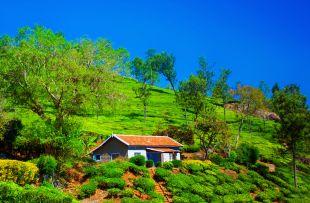Teafield in Coonoor, India copy
