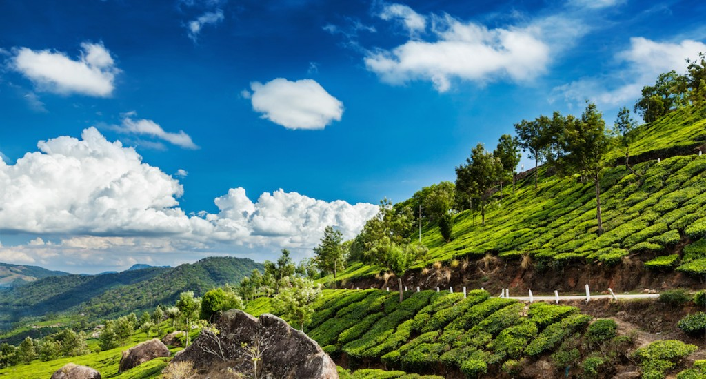 Kerala India travel background - green tea plantations in Munnar, Kerala, India copy