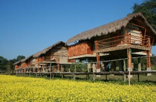 Diphlu_River_Lodge